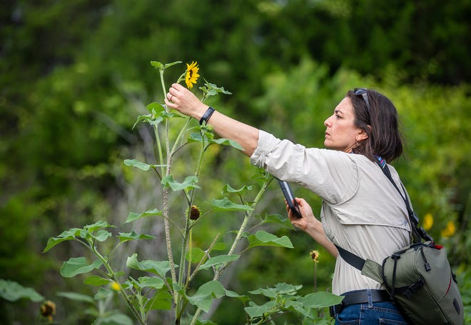 Tania Homayoun's work as a biologist in the Texas Parks and Wildlife Department gets a boost from amateur observers in a program called Texas Nature Trackers, which involves the public in scientific research.