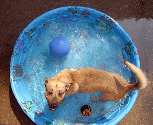 Veterinarians say to keep dogs cool in the summer to avoid heat stroke and possible death on hot summer days.