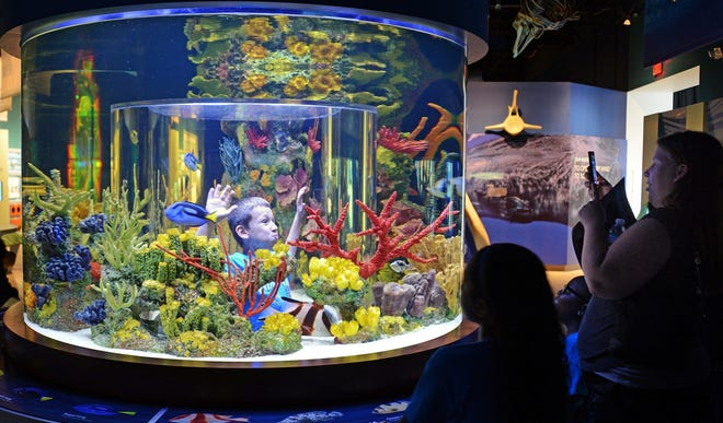 Ocean Commotion is June 25 at the South Florida Science Center and Aquarium in West Palm Beach.