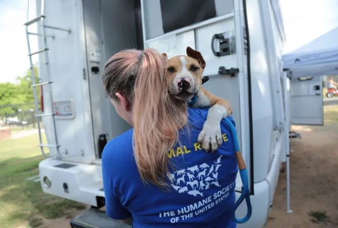 Members of the Humane Society of the United States' Animal Rescue Team and Gaston County Police rescued dogs in an alleged dog fighting ring on June 2.
