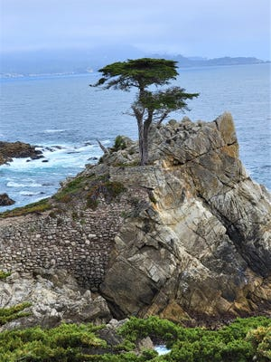 The Lone Cypress stands above the Pacific Ocean in Pebble Beach, Calif.