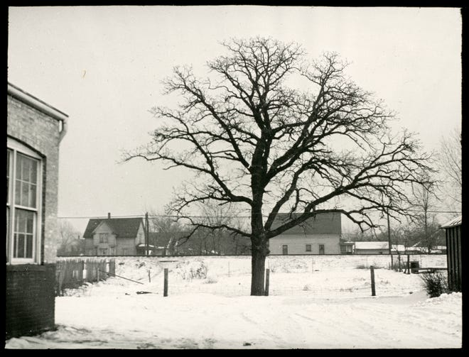 A photo taken in 1936 in Kenosha shows an oak tree that no longer exists, but was supposedly near to the site of John McCaffrey's hanging in 1851. The location was between 14th Avenue and the Chicago and Northwestern Railroad at about 67th Street, just east of the Sullivan Becker machine shop. The part of a brick building shown is the machine shop.