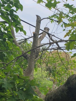 A reader in Haywood County questions why such stark tree cuts were made recently by a Duke Energy contractor.