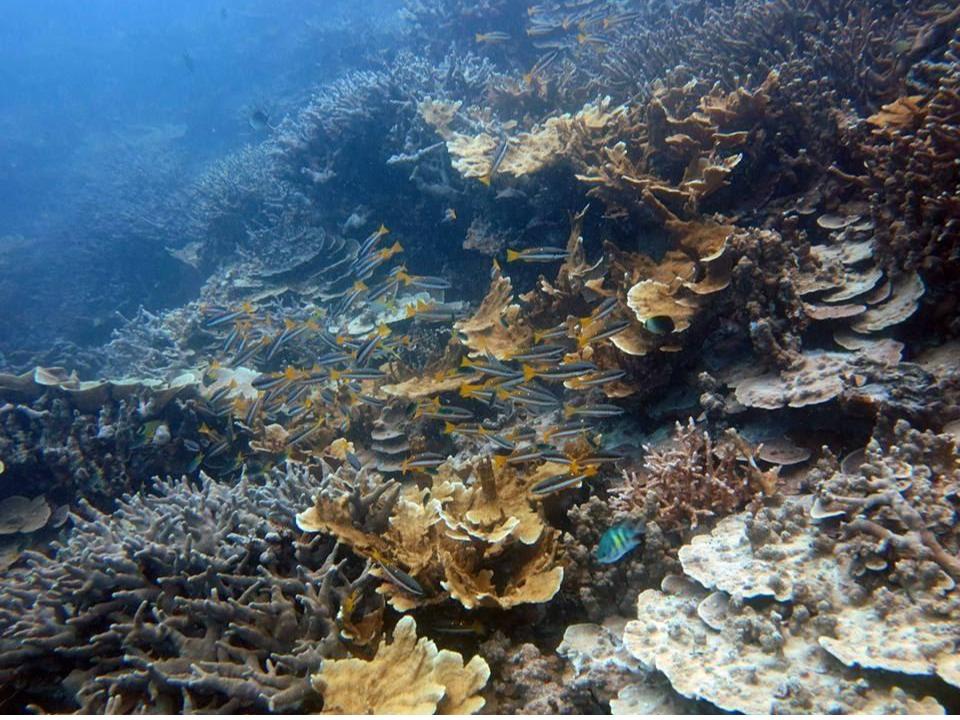 Thriving coral communities at Nikko Bay (Ngermid Bay), Palau.