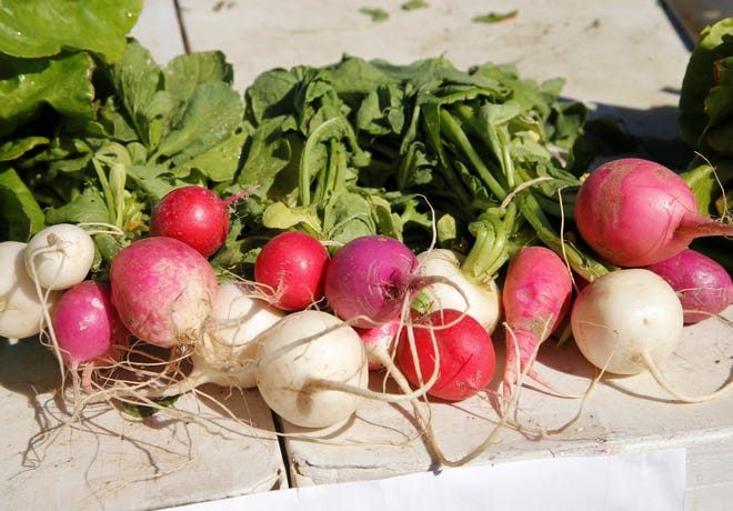 Radishes are seen for sale by Bridgewater Gardens on June 12 at the Farmington Growers Market.