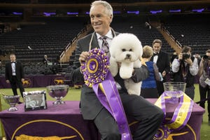 San Joaquin County dog handler Bill McFadden poses for photos with Flynn, a bichon frise, after Flynn won best in show during the 142nd Westminster Kennel Club Dog Show in 2018, at Madison Square Garden in New York.  McFadden, who has guided two Westminster winners, was rear-ended and injured while driving a van full of dogs cross-country to the show, his wife and fellow star handler, Taffe McFadden, said Saturday.