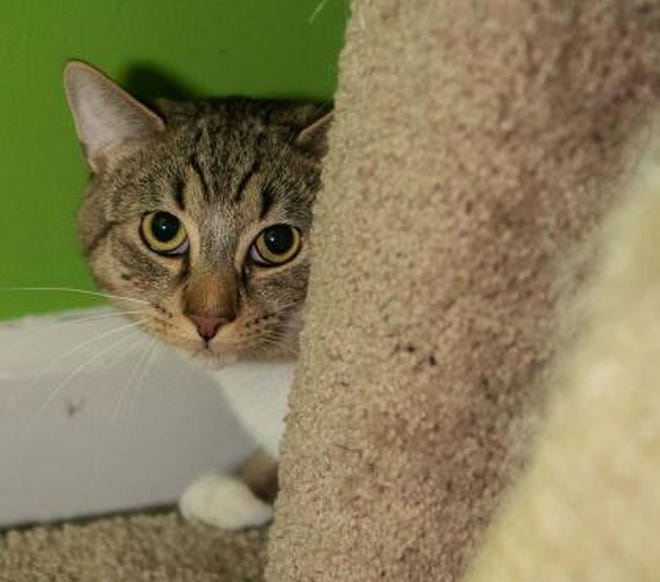 Ethan Allen is available for adoption.