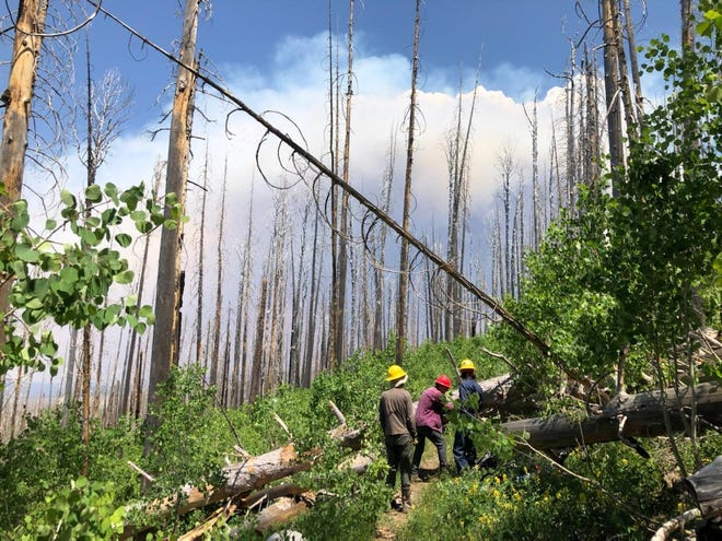 Fire crews clear the Crest Trail Saturday, June 12, 2021 as part of the response to the Johnson Fire burning in the Gila National Forest.
