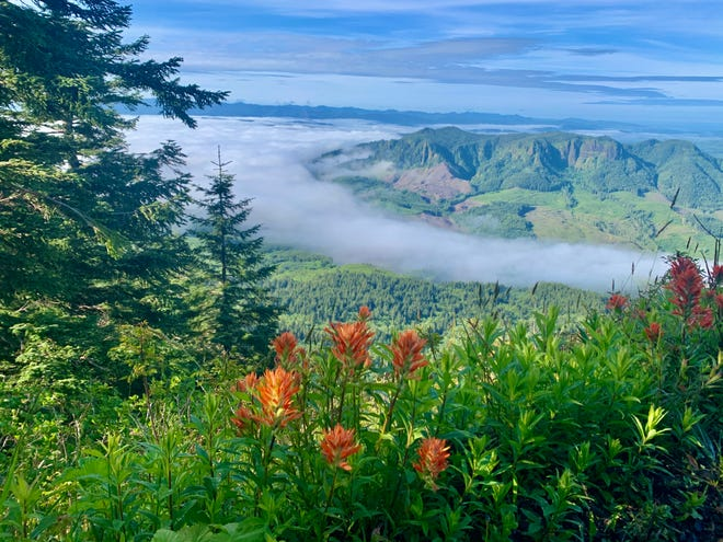 The hike up Saddle Mountain in the Coast Range offers old-growth forest, wildflower meadows and sweeping views from the Pacific Ocean to the Oregon Cascade volcanoes.