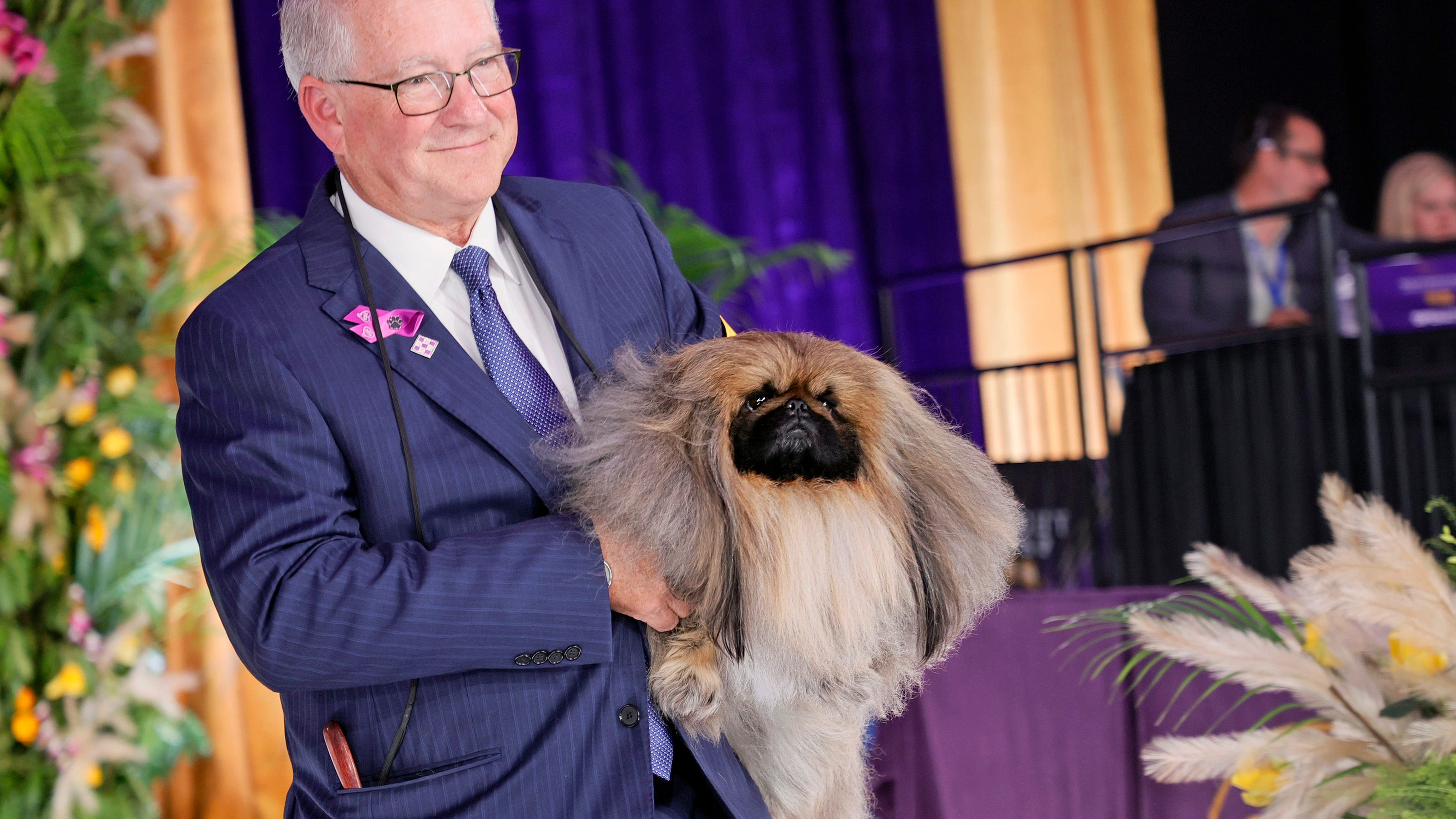 Wasabi the Pekingese wins Best in Show at 145th Westminster Kennel Club Dog Show - USA TODAY