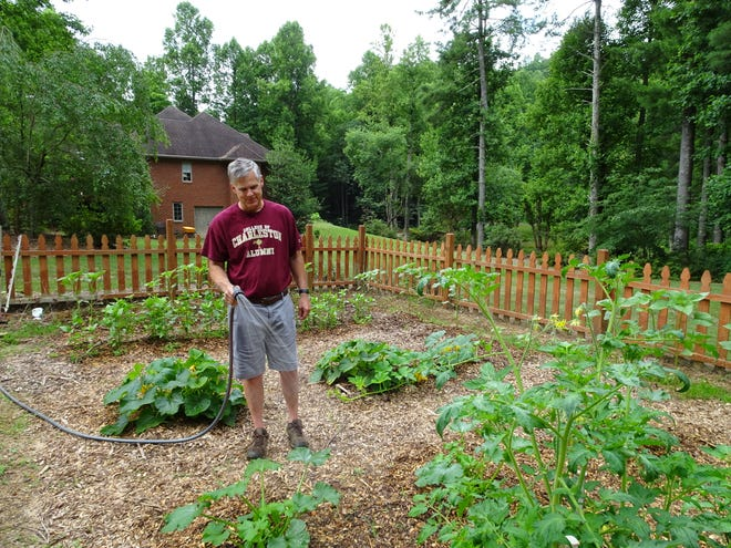 """Myron Steppe has gardened in Flat Rock for more than 20 years as an enjoyable hobby and in memory of his grandparents' fresh-sliced tomatoes and cucumbers. """"That is a taste you never forget,"""" he says. Although his parents considered a suitable garden to be at least 5 acres, Steppe continues the family tradition in a fenced-in portion of his backyard. He prefers Big Boy tomatoes, because they were his mother's favorite, along with squash, cucumbers, assorted peppers and sunflowers (his grandmother's favorite flower)."""