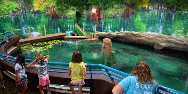 A whole new look for the newly renovated Parker Manatee Rehabilitation Habitat at The Bishop Museum of Science and Nature, located in Bradenton. They also have welcomed two new manatees that were both recently rescued in the Sarasota area.