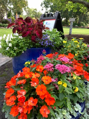 Rainbow colors of annuals make colorful summer container gardens.