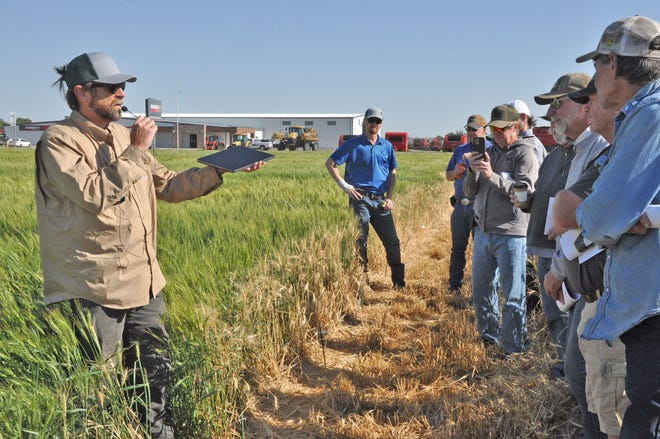CSU wheat breeder Esten Mason discusses the varieties in the wheat plot at Burlington during the annual Colorado wheat field days. Developing resistance to the wheat stem sawfly and wheat mosaic viruses have become priorities for the program in recent years.
