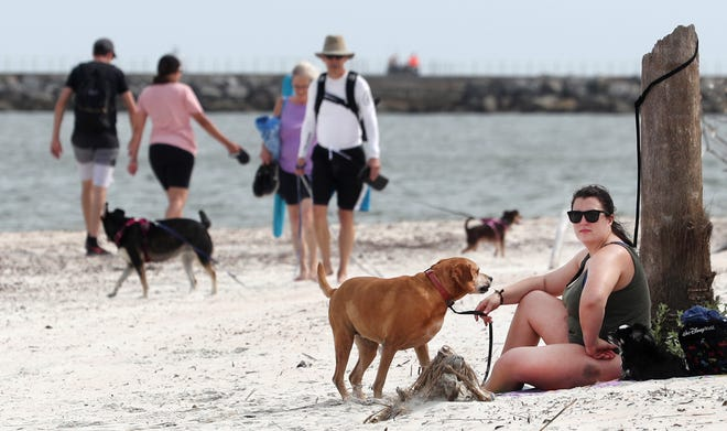 People and their dogs hangout at the dog beach area at Smyrna Dunes Park, Wednesday June 16, 2021 one of only two dog friendly beaches, with Ponce Inlet the other location.. The Volusia County Council will take a look at options for opening up the beach to pets.