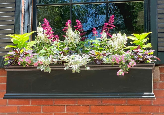 Walking through the streets of Beacon Hill, people can find the beauty of the season in the window boxes of many of the homes.