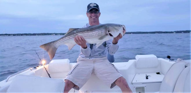 Steve Sears of Seekonk with the 39-inch striped bass he caught while trolling this week off Prudence Island in the East Passage of Narragansett Bay.