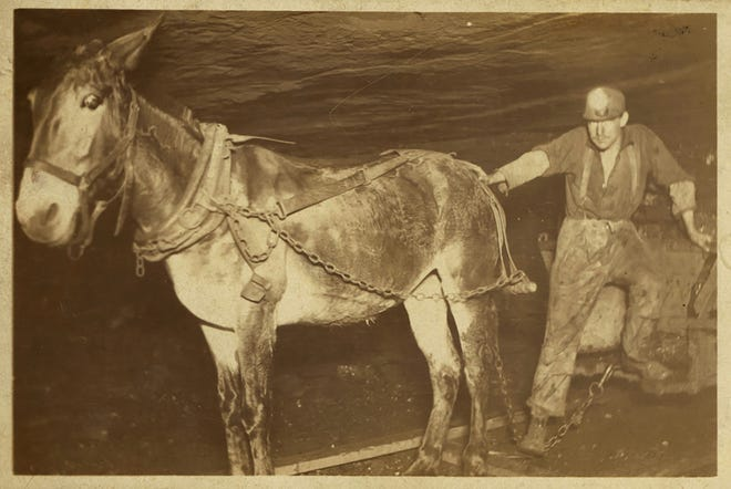 Mule and driver in mine shaft.