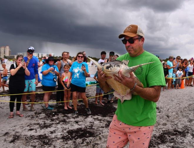 Under dark storm clouds, Brevard Zoo Executive Director Keith Winsten carries Wandering Wiley to the ocean at Lori Wilson Park in Cocoa Beach June 16, 2021. Brevard Zoo's Sea Turtle Healing Center celebrated World Sea Turtle Day by releasing the Kemp's ridley sea turtle, which is the smallest sea turtle in the world. The release, scheduled for 1:30 p.m. Wednesday, took place about 20 minutes early before the beach closed because of lightning.