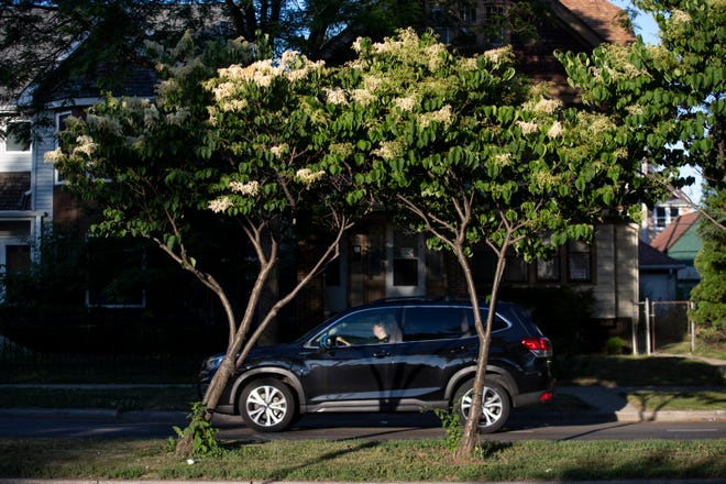 Faced with alternatives for how to fix N. Humboldt Blvd., between E. North Ave., and E. Keefe Ave., city officials are opting for an alternative that saves the most mature trees and keeps bus service running.