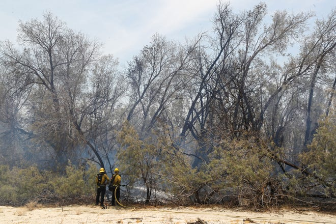 Firefighters work to put out a fire in the tamarisk trees that line the railroad just north of Da Vall Dr. in Cathedral City, June 16, 2021.