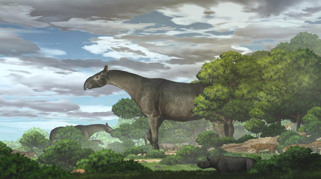 Ecological reconstruction of the new giant rhino Paraceratherium linxiaense in the northeastern Tibetan Plateau during the late Oligocene.