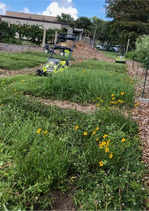 A novel lawn approach, bahiagrass blended with wildflowers attracts pollinating insects.