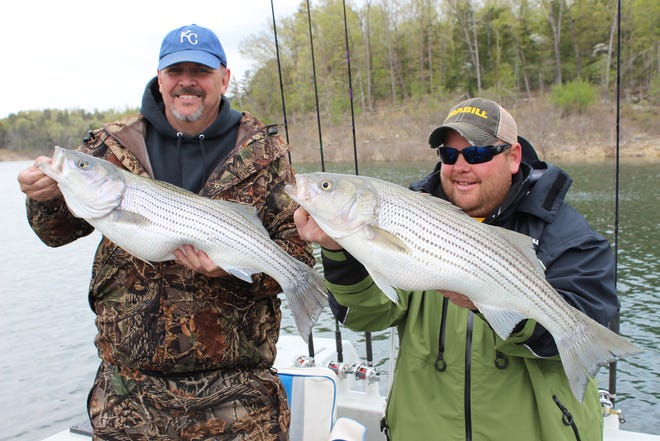 Stripers are fun to catch andgood to eat.