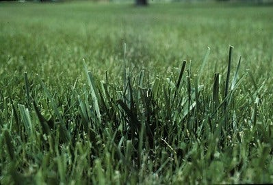 The appearance of turfgrass is the best way to determine when a lawn needs to be watered.