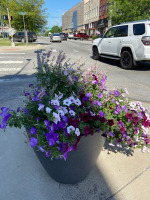 Plants like these found in downtown Sherman are blooming from the mixture of recent rains and sunshine.