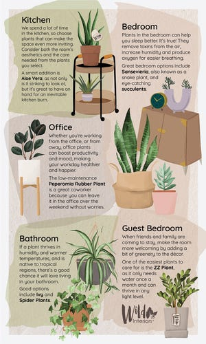 From bathrooms to bedrooms to offices, you can make the rooms of your home healthier and more more inviting by becoming a plant parent.