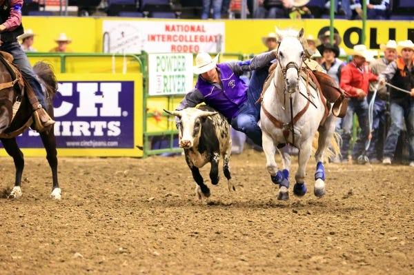 Tarleton State University steer wrestler Walt Arnold posts a 5.2-second time on Tuesday in the second round of the College National Finals Rodeo in Casper, Wyoming. His third-round performance was set for Thursday night.