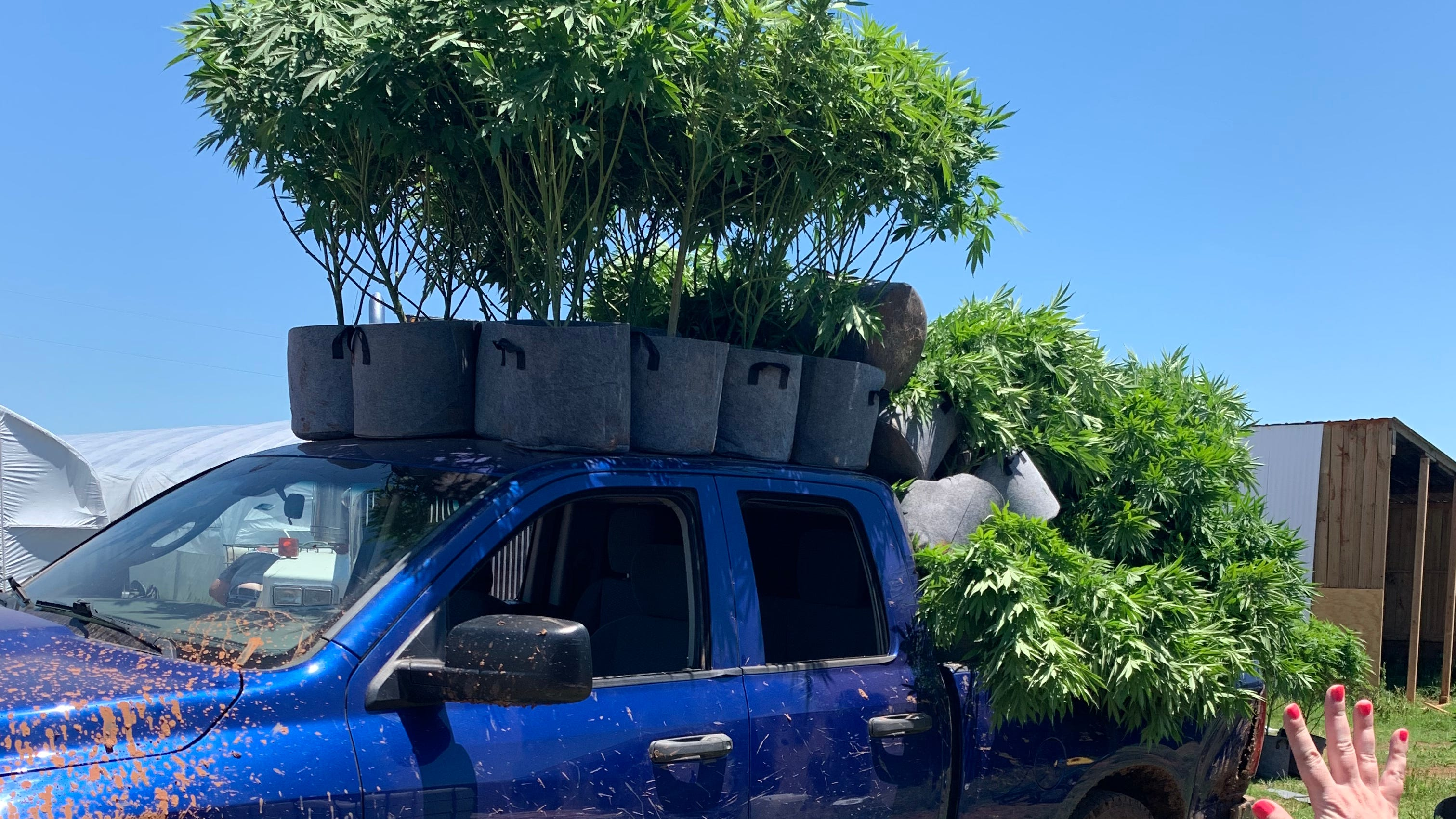Black market cannabis in Oklahoma opens door to labor ...