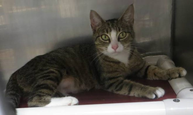 Zelda is a sweet cat looking for a sunny home to call her own.