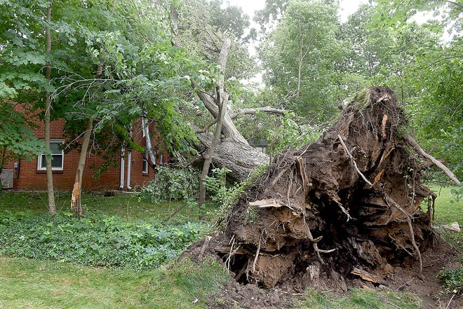 A tree was uprooted by high winds on Sunday before landing on a house at 409 Thilly Ave. It is not known if anyone was injured in the home.