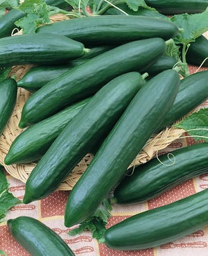 Now is the time to plant cucumbers.