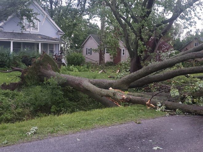 Many trees fell during Sunday night's storm.