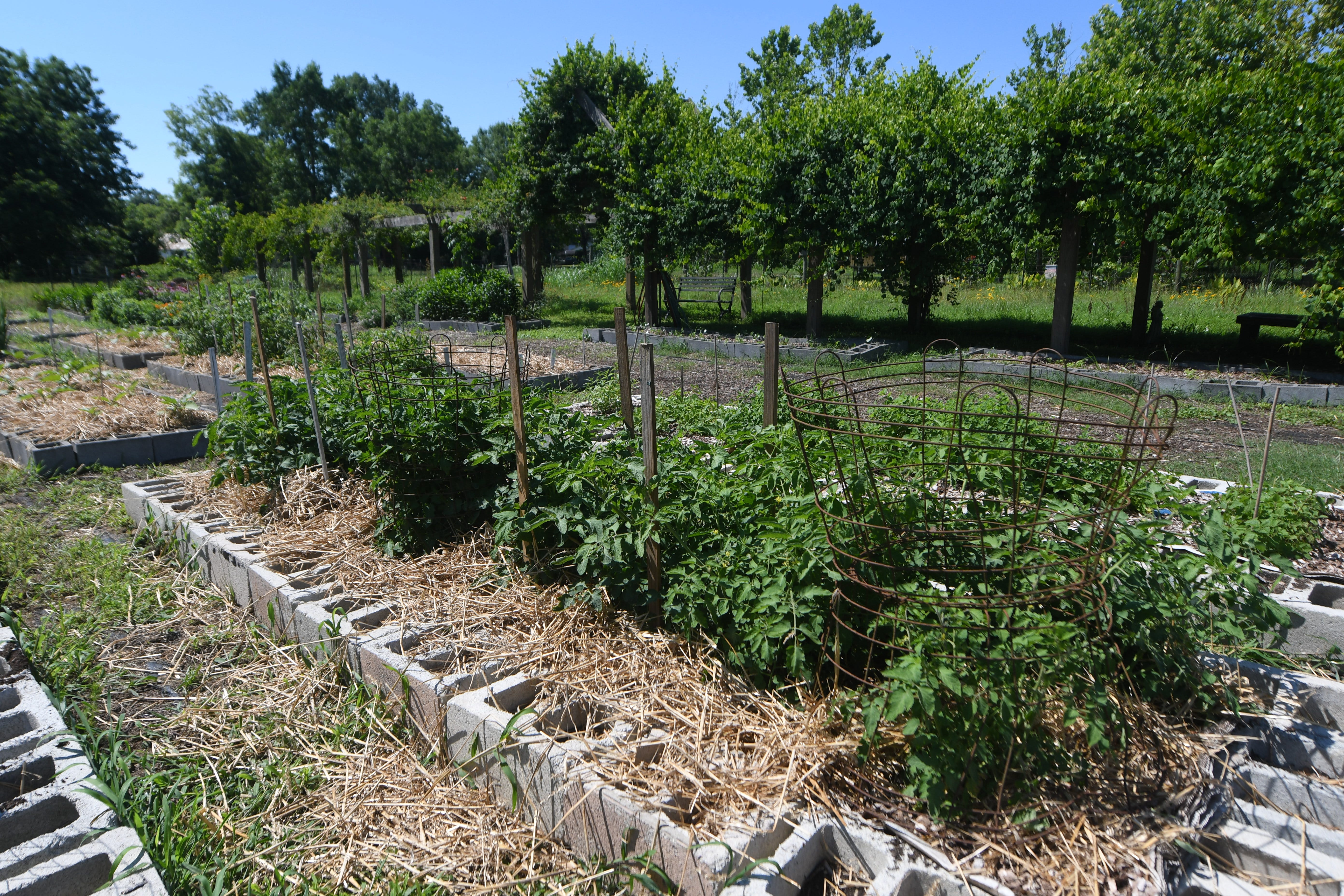 The 5-acre Common Grounds Community Garden sits on a vacant lot in Kinston, Wednesday, June 16, 2021. The non-profit organization is hoping to bring fresh vegetables closer to people in East Kinston.     [MATT BORN/STARNEWS]