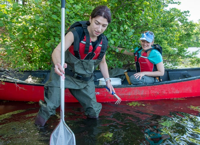Student assistant Zoe Krouner, left, and Worcester State University researcher Diana Sharpe search for Asiatic clams June 16 in Patch Reservoir.