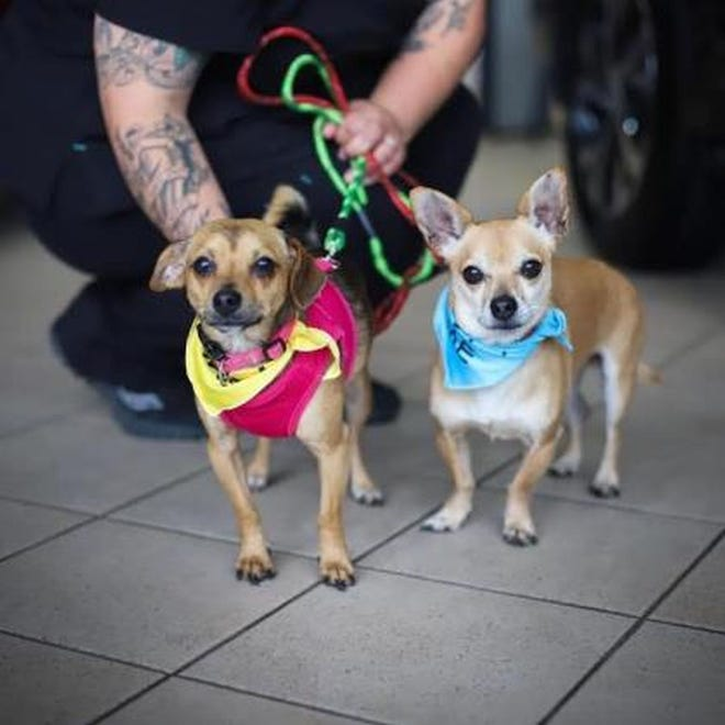 Kovi and Poppy are available for adoption.