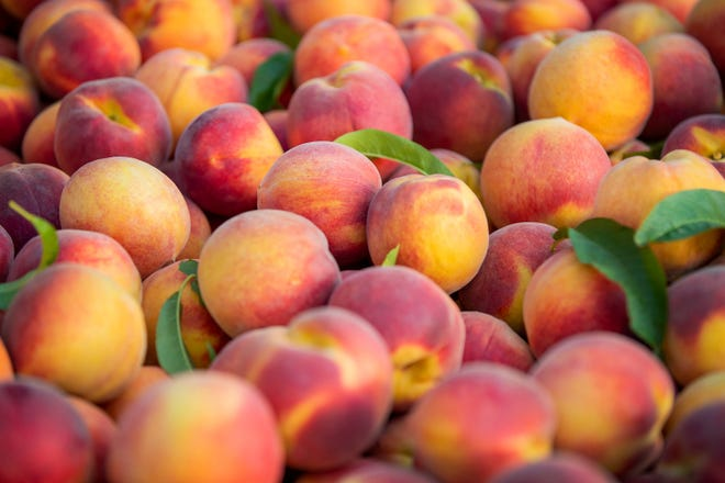 Tree-Ripe Fruit Co. is making its annual treks to Wisconsin with plenty of fresh peaches.