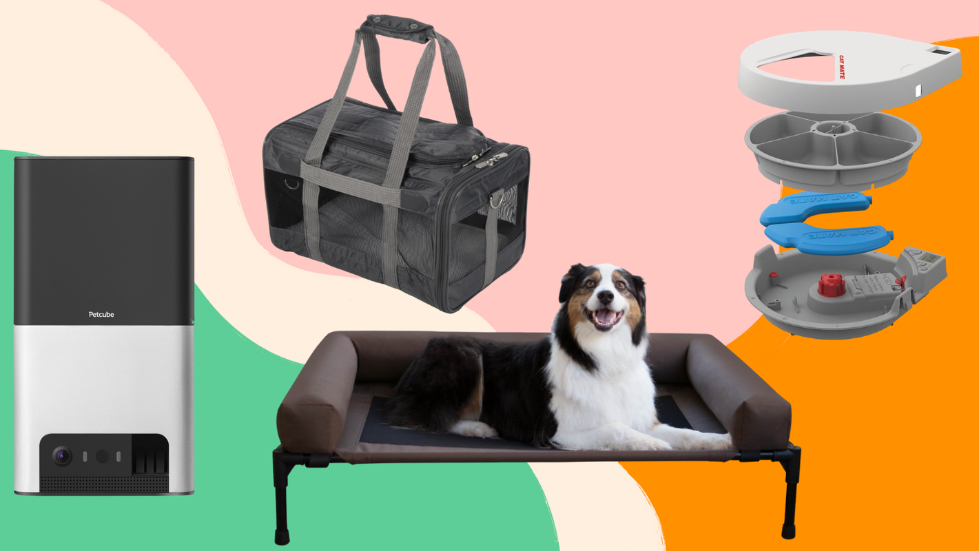 Pets can get in on Prime Day 2021 with Chewy's huge Blue Box event