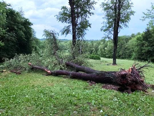 An uprooted tree was among hundreds felled during a storm last weekend that struck Ingersoll Scout Reservation west of London Mills.