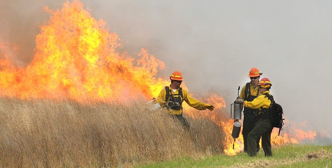 U.S. Department of Fish and Wildlife's Rachel York hands a torch to Grande Rhonde Tribe firefighter Jim Pinder while firefighter Aaron Williamson lights native grasses behind the pair near Harrisburg, Ore., on Oct. 7, 2010.