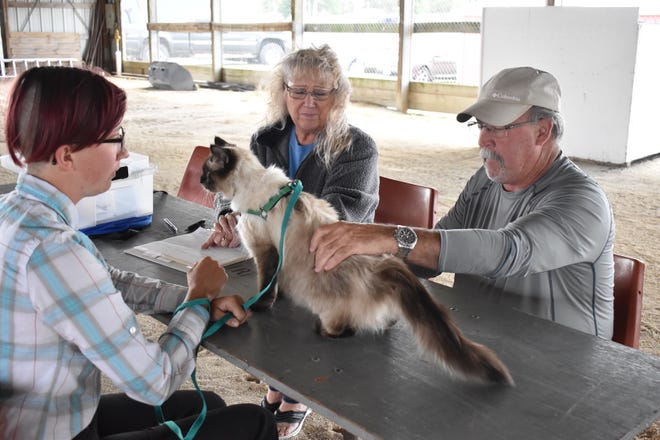 During the 4-H small pets show on Monday, June 21, Breeanna Olson, left, shows her cat Molly to judge Patrick Fairbrother, a veterinarian, and his wife Christine. Olson, a Cambridge resident, belongs to the Rough Riders 4-H Club.
