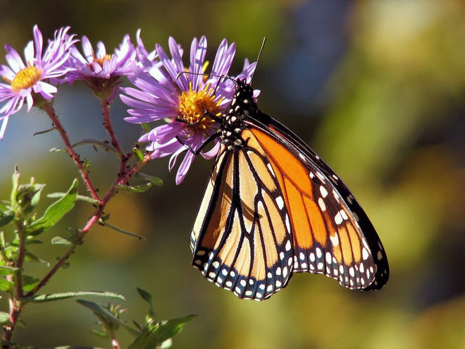 Pollinator plants provide needed food and shelter for pollinators.