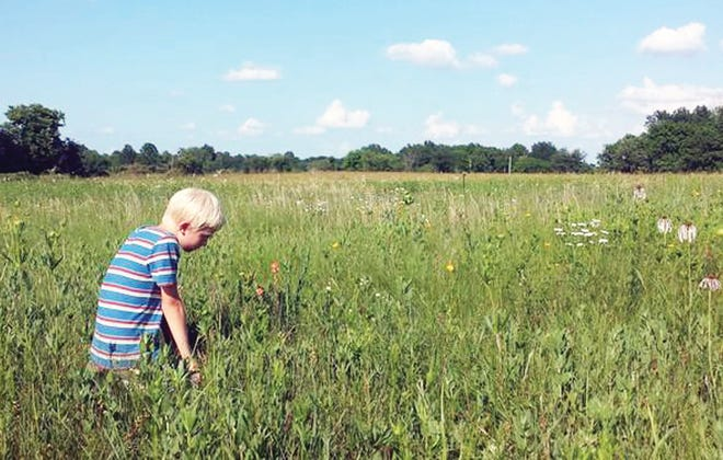 Managed prairie remnants are places to explore Missouri's natural history, are colorful, and provide forage for cattle as well as wildlife havens.