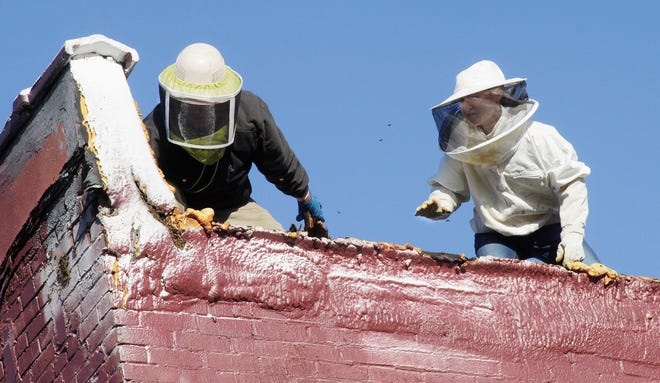 Dr. Mark Lajeunesse, left, and Tori Brumbaugh of Moberly had been on the roof of Lajeunesse's chiropractor and health fitness business located at 211 N. Clark St. the evenings of June 21-22 dressed in protective gear as they work to relocate a large size bee hive. Lajeunesse and Brumbaugh had been attempting to capture the hive's Queen bee as well as many bees as possible and safely transport them to another remote site.