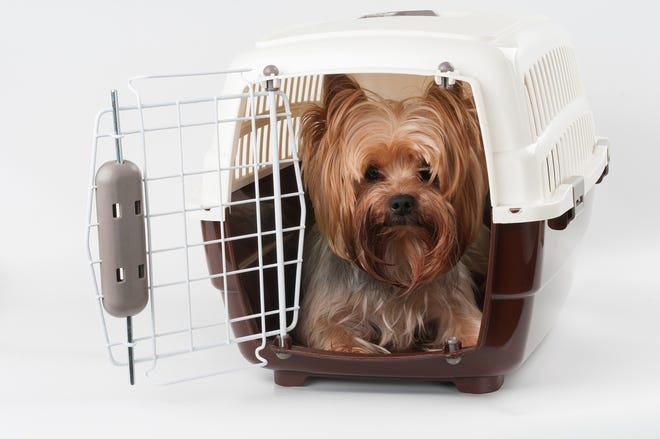 For many dogs, cats and other animals, flying isn't fun; it's frightening. And in some cases, it can even be fatal. That's why, if your post-pandemic plans include air travel with your animal companions, it's vital to take every precaution to ensure that you can do so as safely as possible.