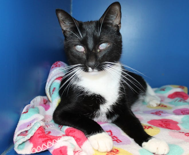 Junior is available at PawsWatch at the Community Cat Center, in Johnston.